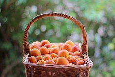 Apricot bounty.