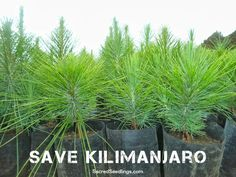 #deforestation #Climate #reforestation #biodiversity
