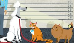 PetCentric - Online Pet Community from Purina