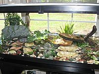 Toad Habitat Set Up Www Picturesso Com