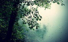 Drzewo, Liściaste, Deszcz