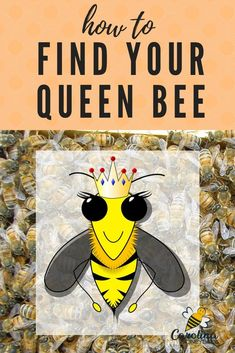 How to find your queen bee in the hive. Finding 1 bee in a hive of thousands is not easy. These tips will help improve your beekeeping skills. Types Of Bees, Bee Hive Plans, Beekeeping For Beginners, Raising Bees, Backyard Beekeeping, Bee Farm, Save The Queen, Bee Happy, Bees Knees
