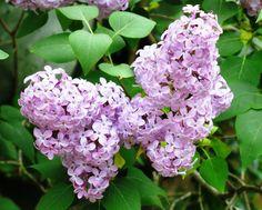 i primi fiori di maggio