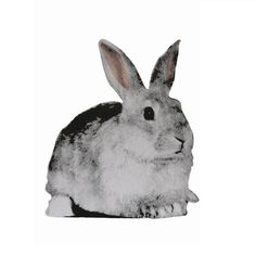 Rabbit Flat Pet