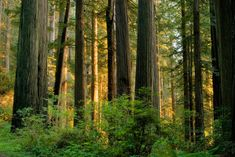 A new study found that forests adapted to hotter temperatures by contributing less carbon dioxide to the atmosphere than scientists previously thought.