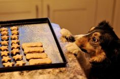 Around here, we love giving our dogs homemade treats. Because they're healthier for your pup and easy to make, they're...
