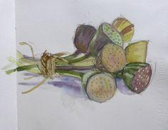 Lotus seed heads Kashmir . watercolour sketchbook - Felicity House