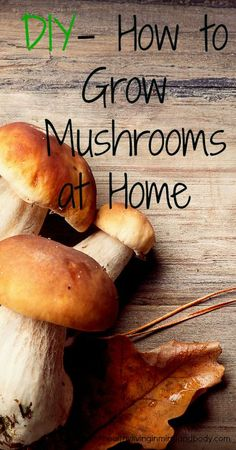 links to mommypotomus. DIY - How to Grow Mushrooms at Home: grow outdoors using the log and stump method or grow indoors using coffee grounds Grow Your Own Mushrooms, Growing Mushrooms, Permaculture, Farm Gardens, Outdoor Gardens, Organic Gardening, Gardening Tips, Vegetable Gardening, Fruits And Veggies