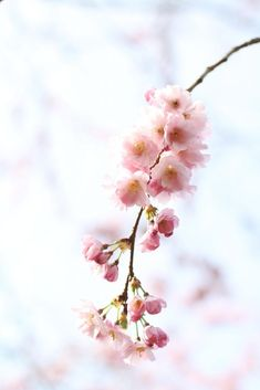 Don't miss the opportunity to capture Beautiful Photographs of the Spring Blossom this year! Here are my tips for getting creative and taking some stunning photographs, no matter the camera you work with! Popular Perfumes, Spring Blossom, Photography 101, Perfume Oils, Photographs, Creative, Flowers, Inspiration, Tips