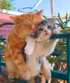 """""""Weekend with my boyfriend"""" 😛😻💕 - Cats Video - Cute cat Funny Cute Cats, Cute Cats And Kittens, Cute Funny Animals, Baby Cats, Cute Baby Animals, I Love Cats, Kittens Cutest, Adorable Dogs, Pretty Cats"""