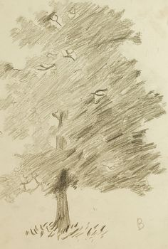Pencil Drawing Study of Tree