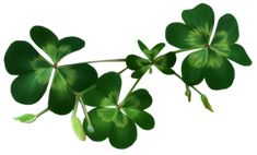 Irish Shamrocks PNG Clipart
