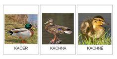 zvířecí rodinky Montessori Science, Montessori Materials, Elementary Science, Bird, Pictures, Smile, Animales, Photos, Birds
