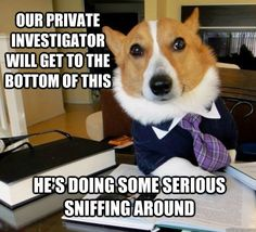 A little laugh at the expense of our PIs to start your Friday night!  ICS will do some serious sniffing around for you too!  www.facebook.com/icsworld