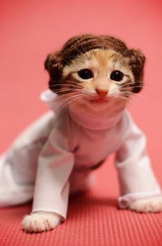 Some days it helps to look at cute kittens dressed as Princess Leia to feel better.