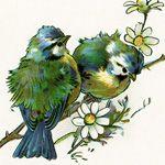 Love these cute bluebirds :)