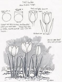 Adron's Art Lesson Plans: How to Draw Tulips, a Beginners Drawing Lesson.