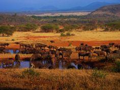 Serengeti National Park | serengeti-national-park-tza122