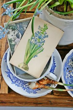 Blue and white transferware dishes, flowering bulbs and botanical hyacinth print -- VIBEKE DESIGN