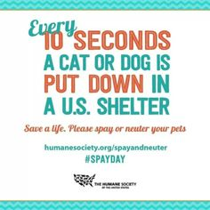 Today is National #spay day. Save a life and spay/neuter your pets.