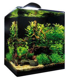 die 19 besten bilder von nano aquaristik fish nano aquarium und snails. Black Bedroom Furniture Sets. Home Design Ideas