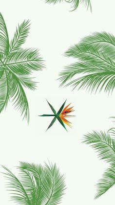 Znalezione obrazy dla zapytania exo kokobop plant
