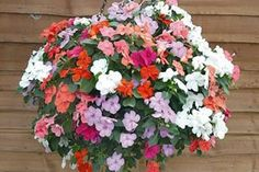 Learn how to make a stunning hanging basket for your garden with the step-by-step instructions and tips in this Garden Plants Guide.