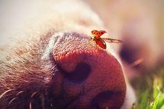 Máme rádi psy   Psi, Pejsci, Štěňátka, Hafíci a Mazlíčci na jednom místě!