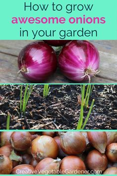 Growing and planting onions successfully can be a challenge if you don't understand a few important tricks. Here are 8 tips for growing awesome onions. - Ultimate Guide to Growing Awesome Onions Vegetable Garden Tips, Veg Garden, Easy Garden, Garden Ideas, Onion Vegetable, Garden Plants, House Plants, Growing Onions, Growing Plants