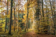 Autumn | #forest #autumncolors #heitersberg  #aargau #Switzerland - take a look at my photoblog under www.raegi.ch or with a click on the pin Switzerland, Autumn Forest, Nature Photography, Country Roads, Instagram, Plants, Pictures, Fall Color Schemes, Woodland Forest