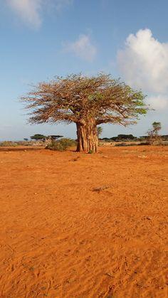 Rozhovor: Cestovanie v Somálsku patrí medzi najnebezpečnejšie na svete. Travelistan Istanbul, Country Roads, Plants, Planters, Plant, Planting, Planets