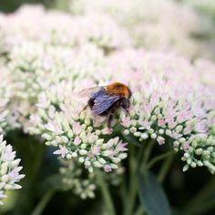 Make your garden bee-friendly in autumn