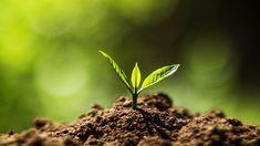 Web Soil Survey – The Basic Information About Web Soil