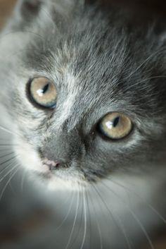 Cats Aren't Evil: 5 Feline Myths That Just Aren't True