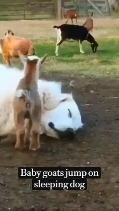 Cute Wild Animals, Baby Animals Pictures, Super Cute Animals, Cute Animal Photos, Cute Animal Videos, Cute Little Animals, Funny Animal Pictures, Animals Beautiful, Cute Funny Dogs