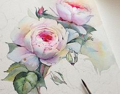 """Check out this @Behance project: """"Queen of Sweden rose in watercolor"""" https://www.behance.net/gallery/28060233/Queen-of-Sweden-rose-in-watercolor"""