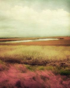 "South Carolina Landscape Photography by Amy Tyler, ""The Lowlands"" #photography #fpoe"