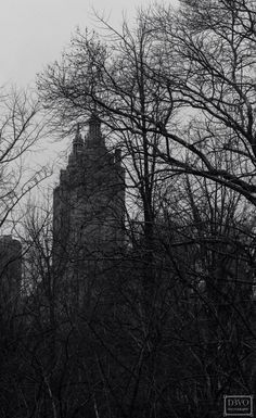 Mysterious Taken in Central Park,NYC  facebook.com/D3VOphotography