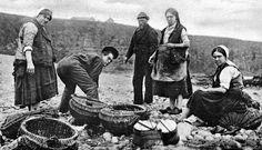 Tour Scotland Photographs: Old Photograph Dividing The Catch Auchmithie Scotland