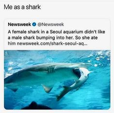 Just viral funny animals memes for you. If you ever think that animals are not funny, these 60 funniest animal Really Funny Memes, Stupid Funny Memes, Funny Relatable Memes, Haha Funny, Funny Cute, Hilarious, Funny Animal Memes, Funny Animal Pictures, Funny Photos