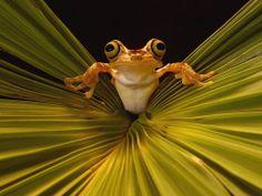 заставки на робочий стіл - Жаби: http://wallpapic.com.ua/animals/frogs/wallpaper-22712