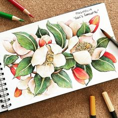 "Alice on Instagram: ""▫️Magnolia ▫️ . Today's flower is a Magnolia, Gail's favourite. . . Slide for more 🤍 . . Sketchbook: @sennelier1887 . Colored Pencils:…"""