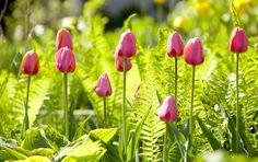10 Gorgeous Ways to Design With Spring Bulbs in Your Garden Garden Yard Ideas, Easy Garden, Lawn And Garden, Spring Garden, Garden Fun, Green Garden, Tropical Garden, Garden Tips, Spring Flowering Bulbs
