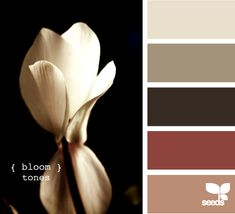 Bloom Tones. Living room is about to become that bottom tan color and that red is the current curtain color of choice. How about it Pinterest? What say you on simple upholstery colors?