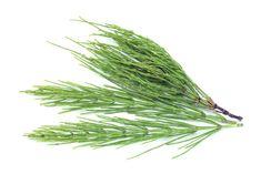 Aloe Vera, Herbs, Herb, Medicinal Plants