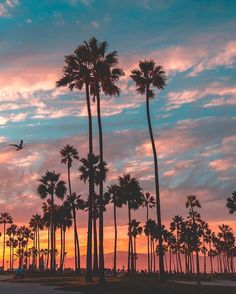 Los Angeles sunset at Travel | Nature | Vacation (@travelnaturephotos) on Instagram