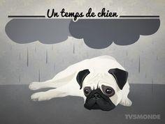 Savez-vous ce que signifie l'expression : il fait un temps de chien ? Cela veut dire que le temps est mauvais !