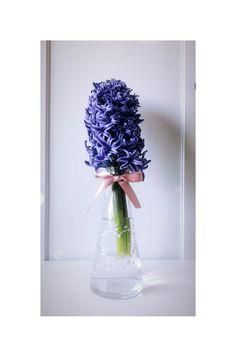 #hyacinth #flowers