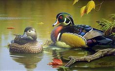 """""""Wood Duck Pair""""  by Rob Leslie"""