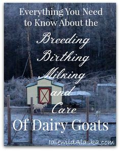 Everything You Need to Know About the Breeding, Birthing, Milking, and Care of Dairy Goats - IdlewildAlaska Keeping Goats, Raising Goats, Goat Barn, Nigerian Dwarf Goats, Mini Farm, Goat Farming, Backyard Farming, Baby Goats, Thing 1
